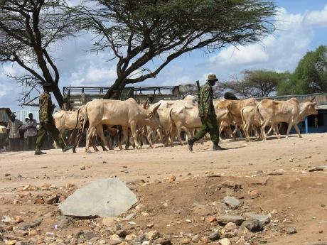 Kenya Para-military driving away Samburu cattle